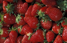 Updated import conditions for WA strawberry fruit trade
