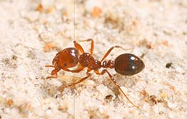 Ten year fire ant eradication commitment​