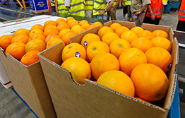 Queensland movement controls for citrus canker