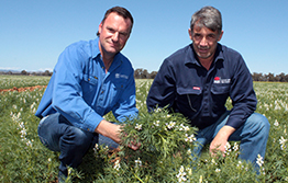 Support for NSW lupin growers
